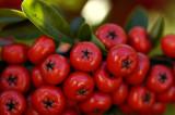Very Merry Berries