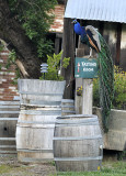 This way to the Wine Tasting Room