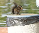 Squirrel having breakfast