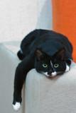 AJs Cat-1.jpg