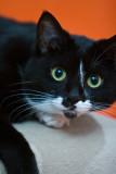 AJs Cat-3.jpg