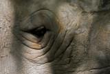 Houston Zoo 04
