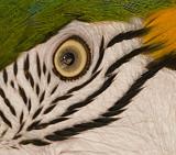Birds Eye  3377.jpg