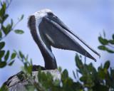 8x10 Pelican 3351.jpg