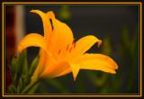 flora_2009