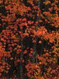 fall_07