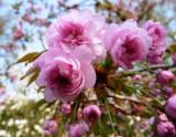 Japan.Garten 020.jpg