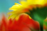 DSC_3075-web.jpg