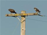 Bird Interactions