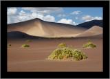 Nevada Scenery