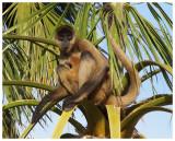 Spider Monkey Business #3