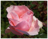 Flower #42