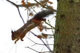 Squirrel at ISO 10000
