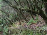 Madeira2003-214.jpg