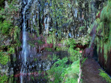Madeira2003-230.jpg