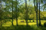 Meadow near Eagle in Waukesha County