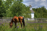 Horse grazing in the pasture near St. Peter's Church