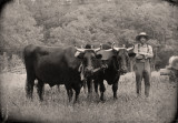 Farmer with yoke of oxen near the Schulz Farm.