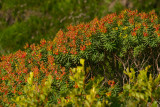Monemvasia Wildflowers