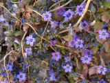 Mycenae Wildflowers