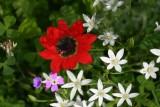 Mystras Wildflowers 2