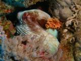 Octopus9.JPG
