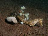 Sepia met zeepaardje1.JPG