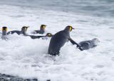 Antarctica and SubAntarctica Penguins 2009