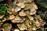 Many Fungi