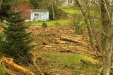 Logs And Debri