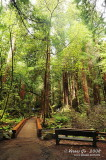 Muir Woods D300_06394 copy.jpg