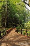 Muir Woods D300_06422 copy.jpg