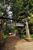 Muir Woods D300_06426 copy.jpg