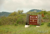 Muir Woods DSCb_03138 copy.jpg