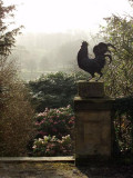Chatsworth - early morning crow