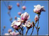 Fleurs/Flowers 2009