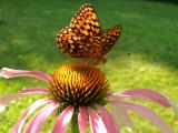Beautiful Oregon Butterflies