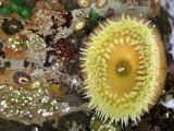 Oregons Beautiful tidepools
