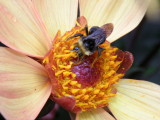 Its a beautiful world  because of bees
