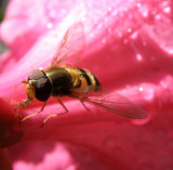 Macro world of Insects