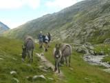 ezels langs de  Reno di Medel  in Val Cadlimo  nabij Stabbio Nuovo