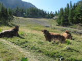 Vanuit Monêtier-les-bains naar Col de l'Eychauda