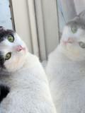 The Kittie in the Window