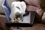 Carly enjoys a laptop