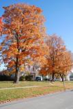 Nevada IA Fall Trees
