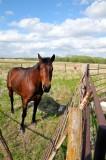 Kanopolis KS Curious Horse