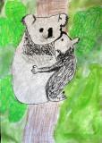 koala, Bill, age:7