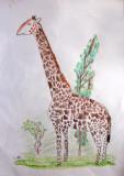 giraffe, Carl, age:7.5