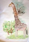 giraffe, Celina, age:7.5