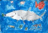 shark, Angus, age:5